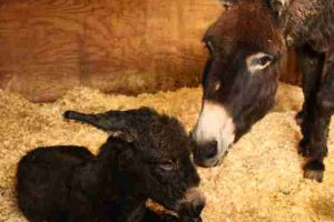 award winning farm welcome new arrival during storm katie
