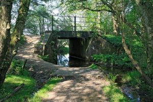 hampshire-county-council-considers-future-of-holmsley-bridge-in-the-new-forest
