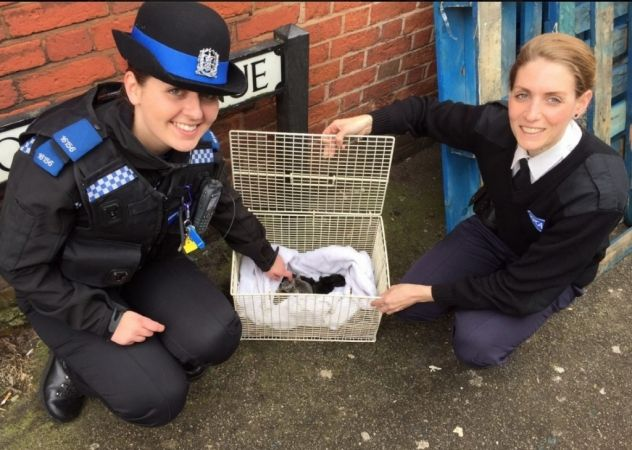 police-save-kittens-from-death-after-southampton-drugs-raid