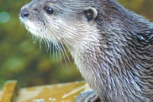 blue reef plan a month of celebrations for otters tenth birthday