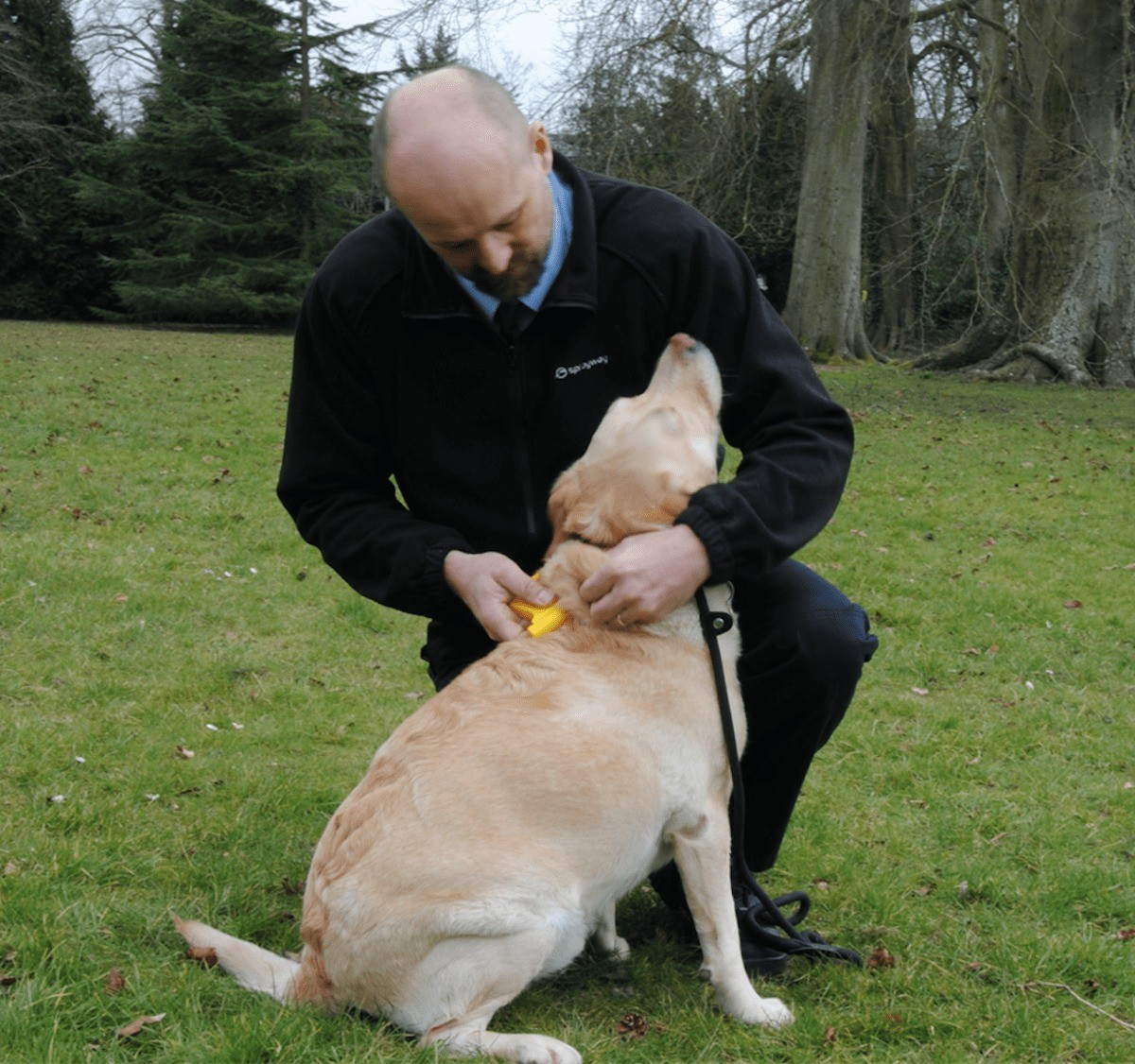 Council Offers Free Microchipping To Prepare Dog Owners For New Law