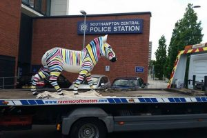 zany zebra recovered from back garden in shirley southampton