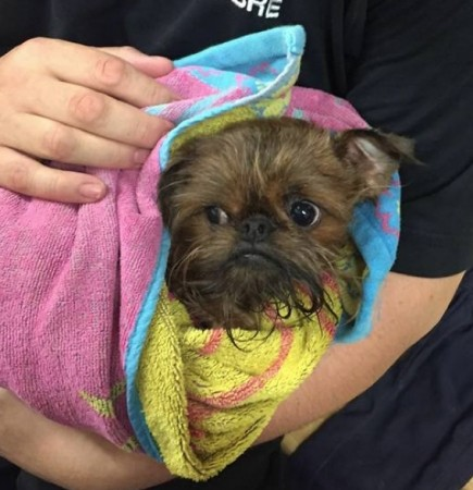 minnie the dog rescued by coastguard search and rescue team in portsmouth