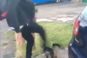 foul attack against cat filmed on mobile phone being investigated by police