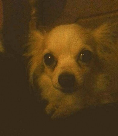 owners appeal for safe return of dog stolen in gosport breaking in