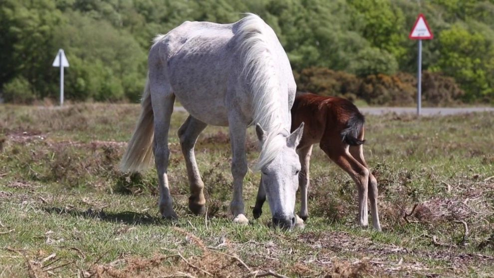 video that proves the new forest is britains most underrated national park