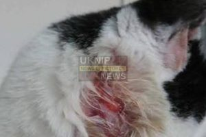 milo the cat shot with pellet gun in frattonportsmouth