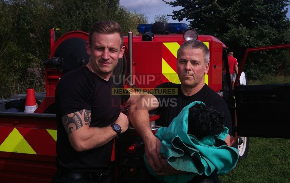 Dog Called Sweep Rescued From Gosport Moat By Fire Crews
