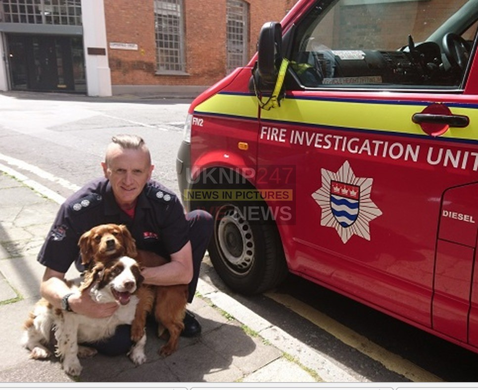 fire investigators retirement means end of service for roscoe and murphy