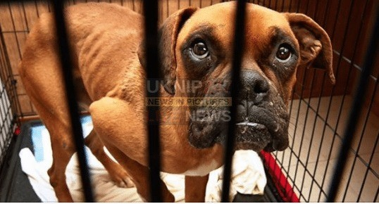 animal cruelty sentences set to rise to five years in prison