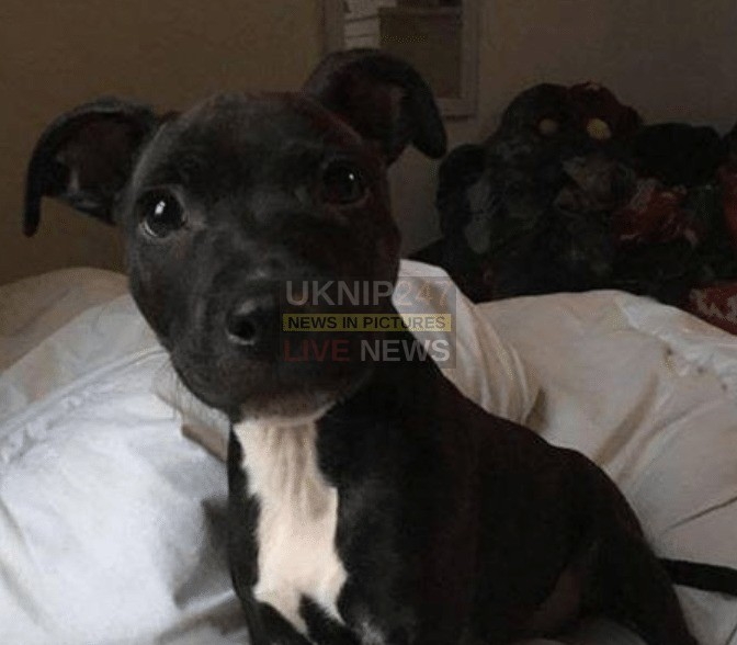 can you help us find puppy boyzie stolen from portsmouth