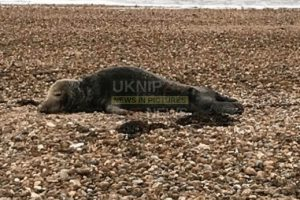 seal beached on hayling isand