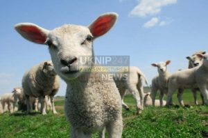 dog owners warned as lambing season approaches