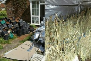 police discover cannabis factory in sittingbourne home
