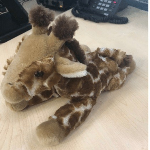 have you lost a giraffe on the m5 motorway