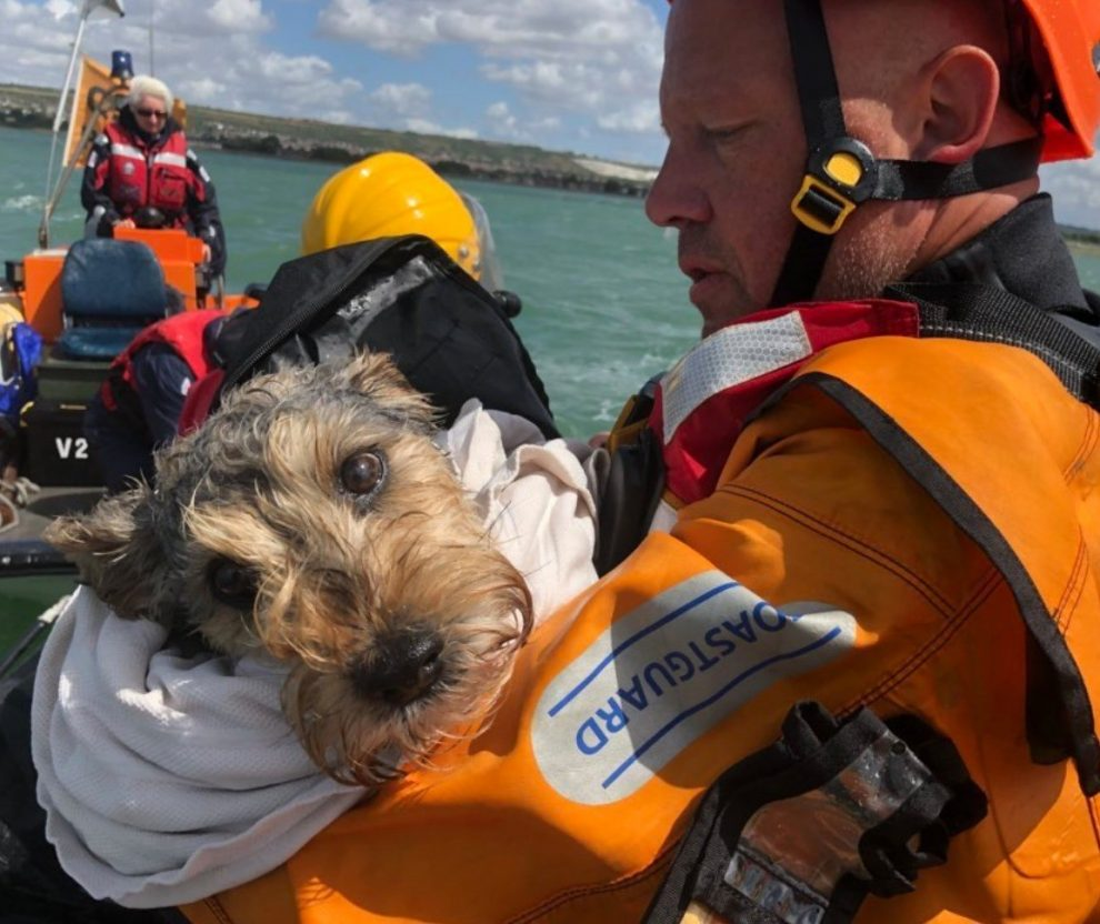 dog rescued after becoming stranded on an island in the middle of portsmouth harbour