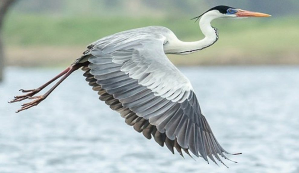 police appeal after heron is killed with bb gun