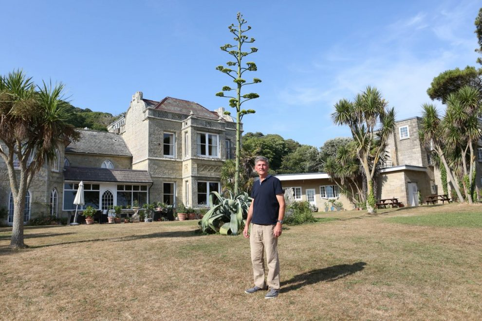 rare agave that takes 40 years to flower is in full bloom on the isle of wight