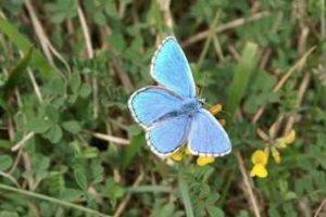 fancy a bit of butterfly spotting on tennyson down