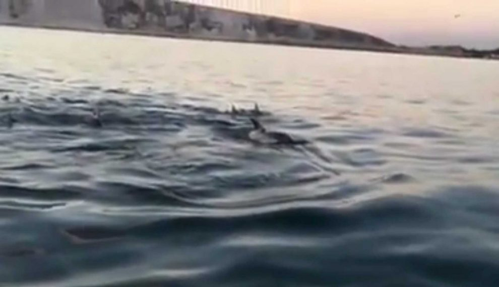 large pod of dolpins spotted off the isle of wight