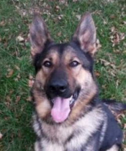 Police Dog Punched During Arrest In Hayes