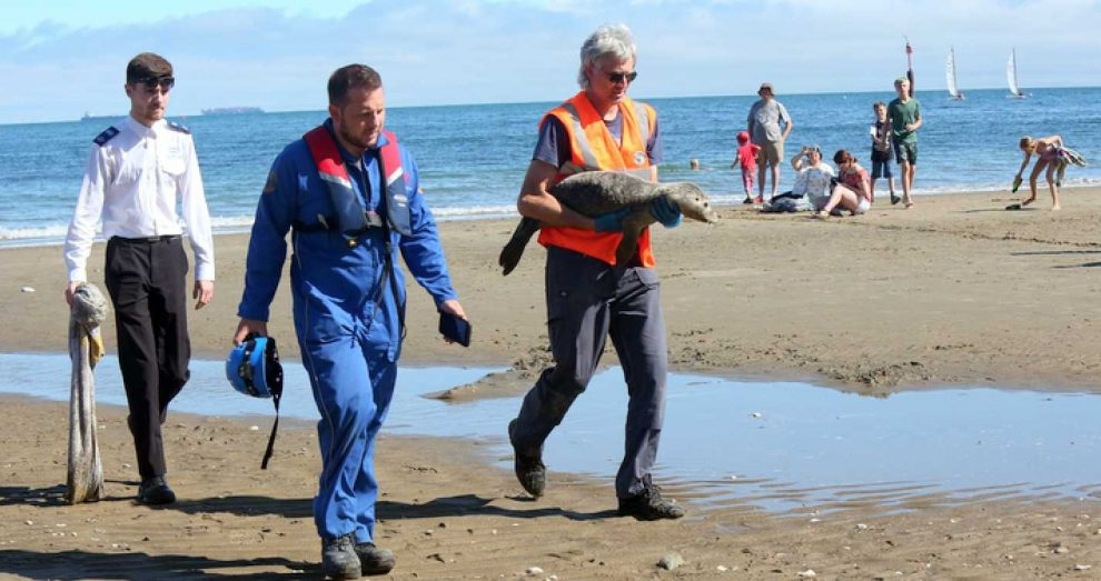seal pup washes ashore at hope beach in shanklin