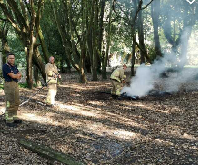 probe launched after youths spotted setting fire to trees in sandown