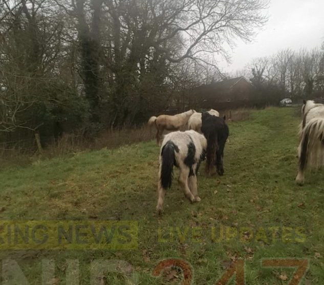 fly grazing is rife in portsmouth