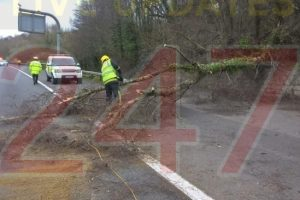 updatedtree crashes down on to the m3 motorway near winchester