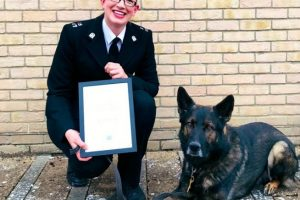 isle of wight dog handler honoured by chief constable