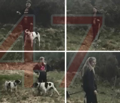 dogs attacks sheep in ashdown forest