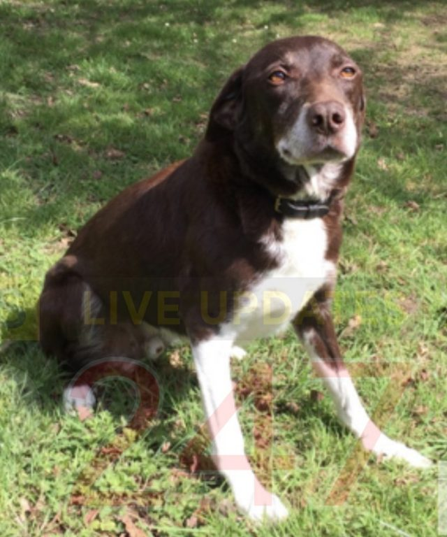explosives dog retires after keeping the public safe for eight years