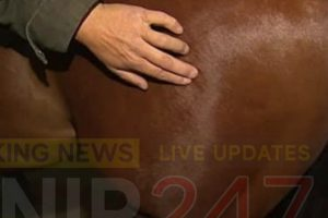 horse shot in cruel attack with air rifle