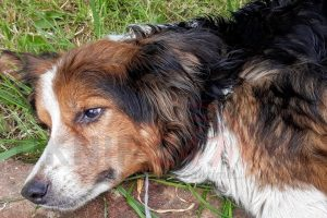 appeal launched after seriously ill dog found