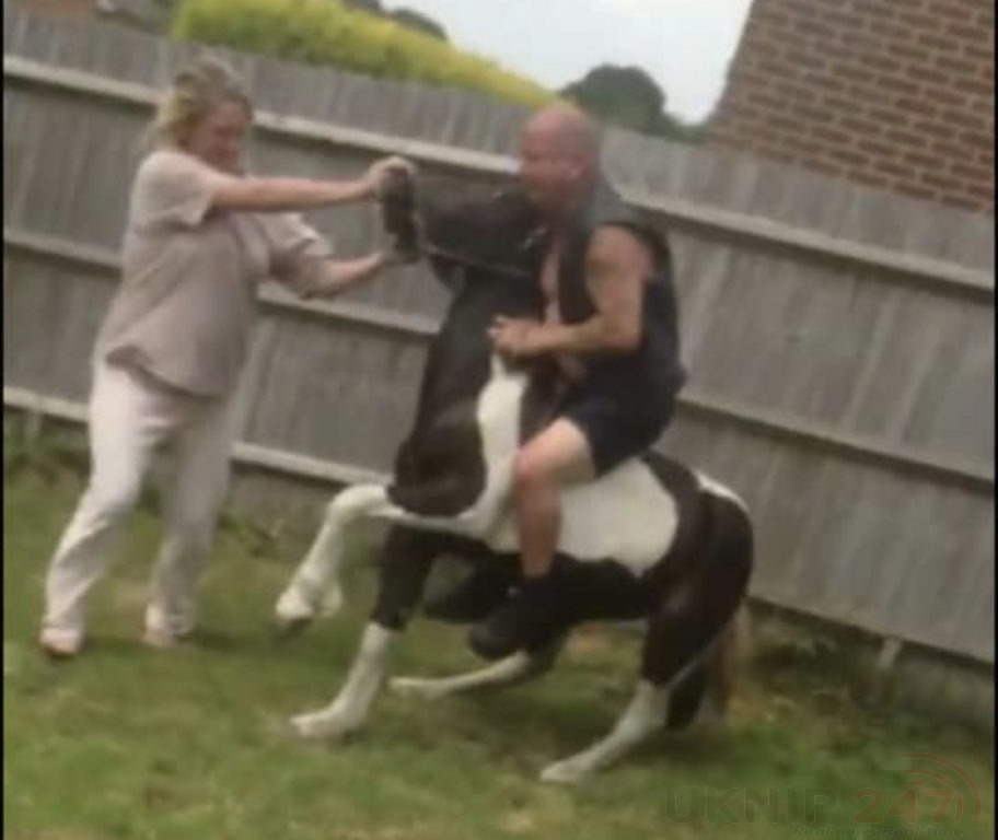 horse abuse captured on video leads to horse being taken by authorities