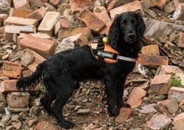 kent fire and rescue are buzzing after new canine crew member