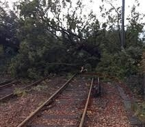 fallen tree blocks railway line between salisbury and gillingham
