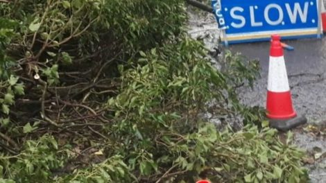 Man Dies After Tree Fell On His Vehicle Near Winchester