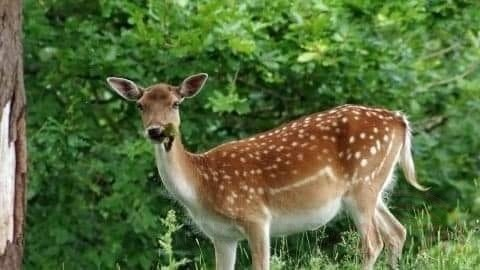Appeal Launched After New Forest Deer Is Short And Be Headed