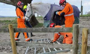 Fire Brigade night-mare call out for stuck horse